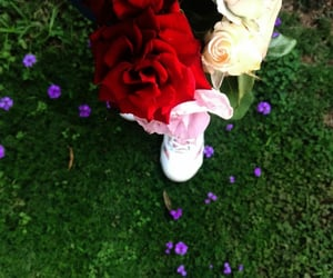 flowers, roses, and red rose image