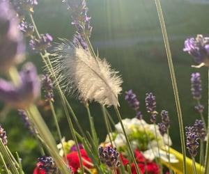 bird, lavender, and present image