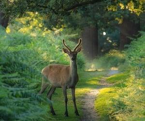 animals, deer, and fondo de pantalla image