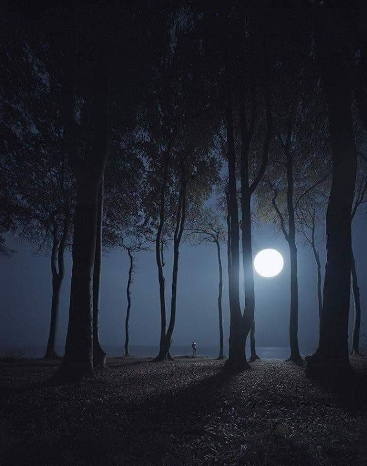 moonlight, night, and woods image