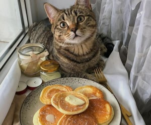 cat, animal, and food image