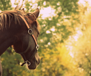country, horse, and pony image