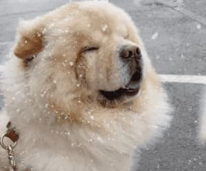 chubby, gif, and puppy image