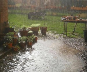 rain, garden, and plants image