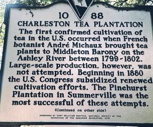 sign, South Carolina, and tea plantation image