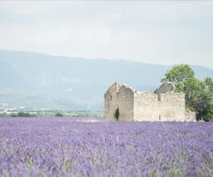 flowers, france, and landscape image
