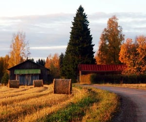 autumn, beautiful, and countryside image