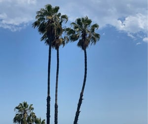 beach, Beverly Hills, and la image