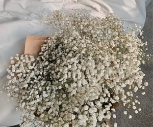 bouquet, baby's breath, and floral image
