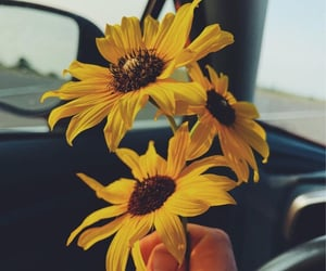 colours, daisies, and daisy image