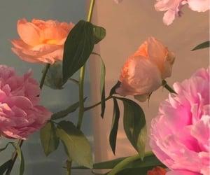 flowers, aesthetics, and beautiful image