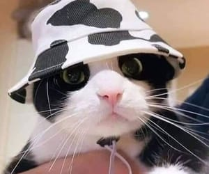 cat, cats, and hat image