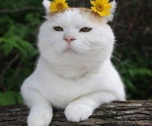 aesthetic, cats, and flowers image