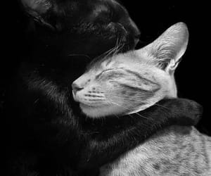 black and white, cat, and together image