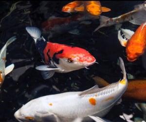 theme, fish, and dark image