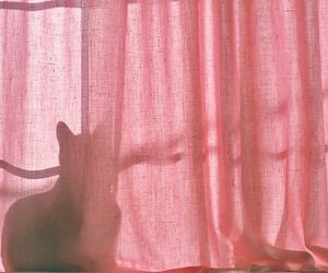 cat, pink, and curtains image