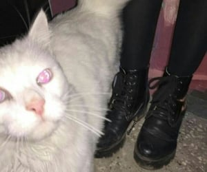 cat, kitty, and white cat image