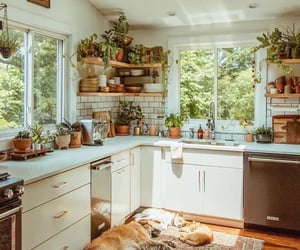 home, kitchen, and plants image