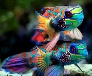 aesthetic, animal, and colours image