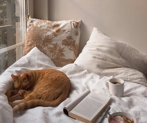 bedroom, book, and cat image
