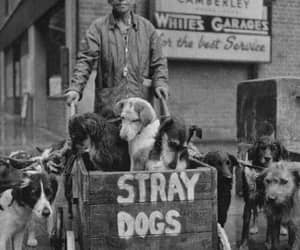 1962, this is love, and save dogs image