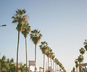 aesthetic, cali, and photography image