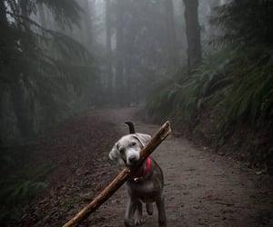dog, stick, and woods image