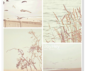 bird, pastel, and photography image
