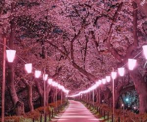 pink, nature, and japan image