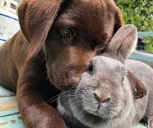 animals, dog, and pets image