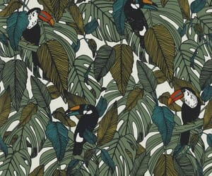 pattern and tropical image