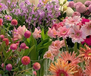 aesthetic, blooms, and flowers image