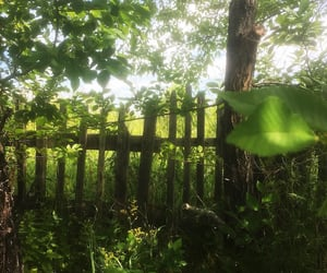 fence, forest, and green image