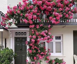aesthetics, beautiful, and flowers image