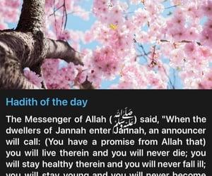 islam, jannah, and ummah image