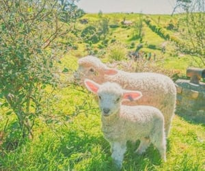 aesthetic, lamb, and animals image
