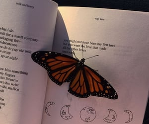 book, butterfly, and aesthetic image