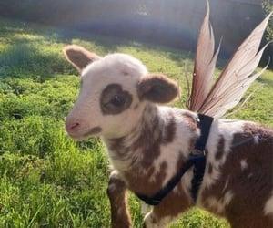 animal, fairy, and cute image