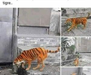tigre and perro image
