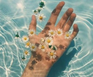 aesthetic, flowers, and pool image
