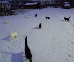 cat, snow, and black image