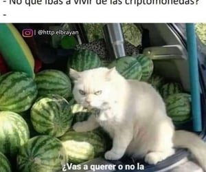cat, sandia, and gato image