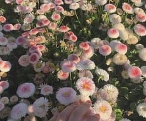 flowers, pink, and royal image