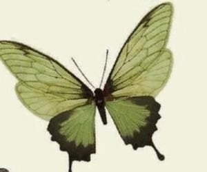 butterfly, archive, and header image