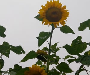 apollo, flower, and pretty image