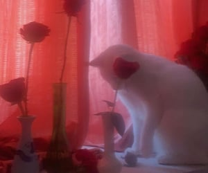 aesthetic, love, and cats image