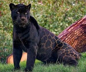 animals, naturaleza, and felino image