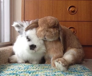 rabbit, bunny, and fluffy image