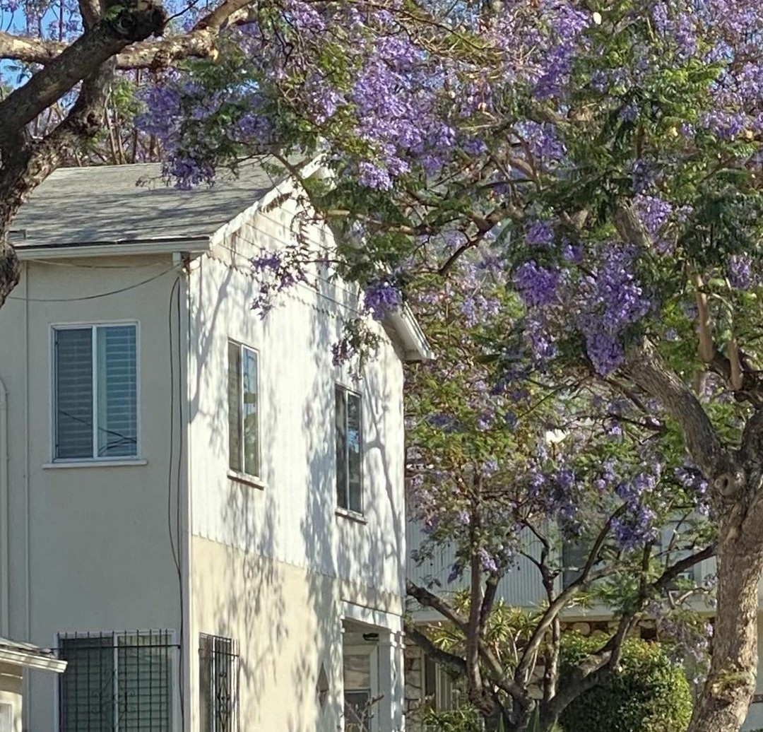 house and purple image
