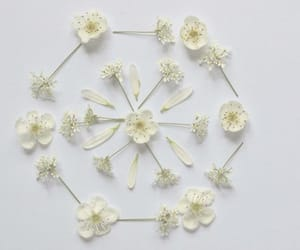delicate, fragile, and petals image